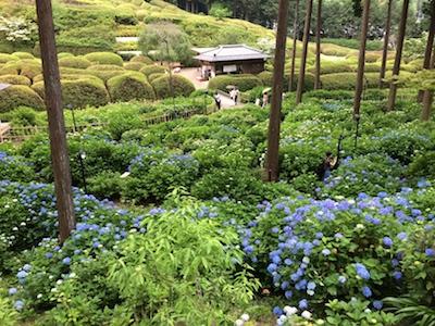 Kyoto1406071